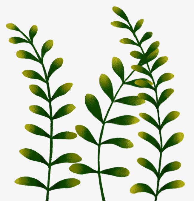 手绘绿植装饰图案png素材下载_高清图片png格式(编号