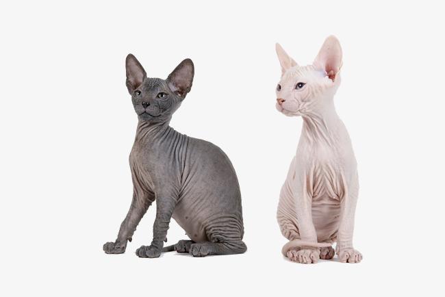 瘦弱的黑白小猫咪