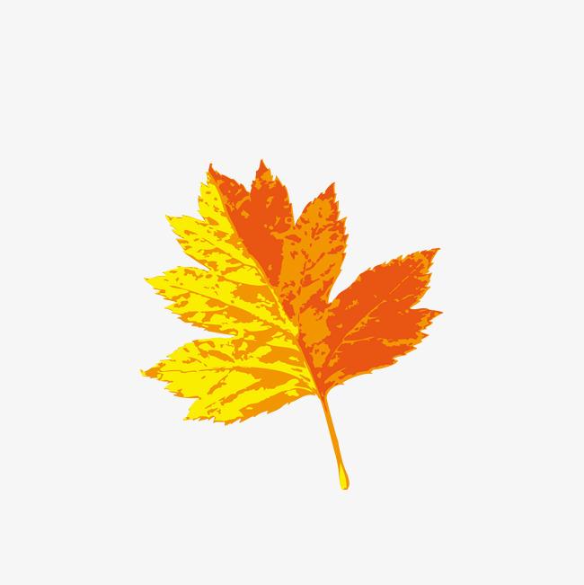 矢量手绘彩色枫叶