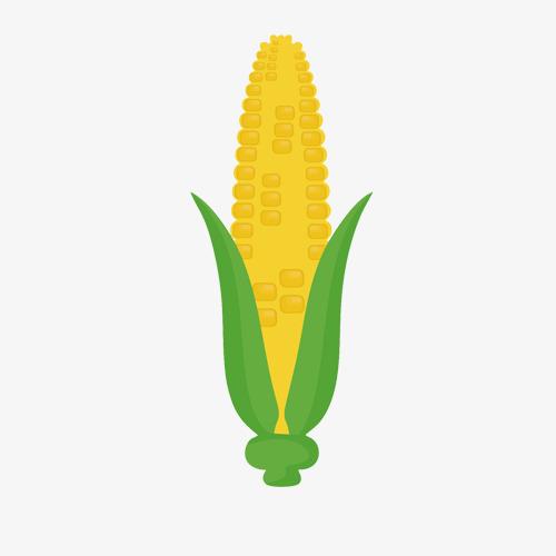 食品黄色玉米棒卡通手绘图