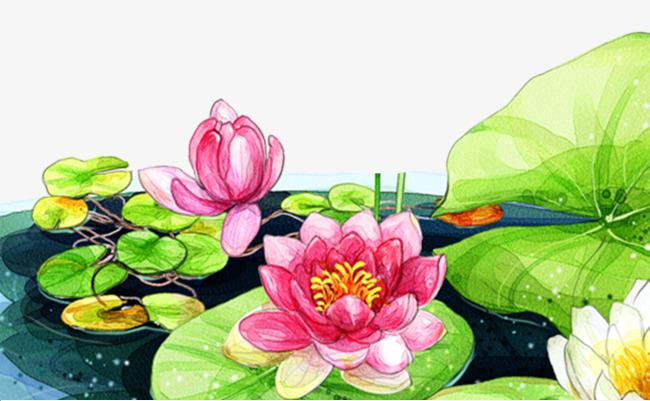 卡通手绘绿色荷叶荷花背景