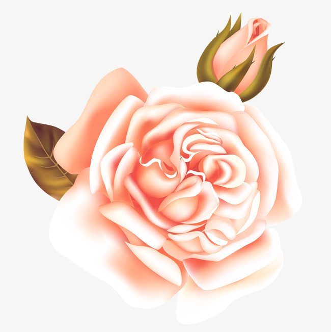 矢量手绘告白玫瑰花