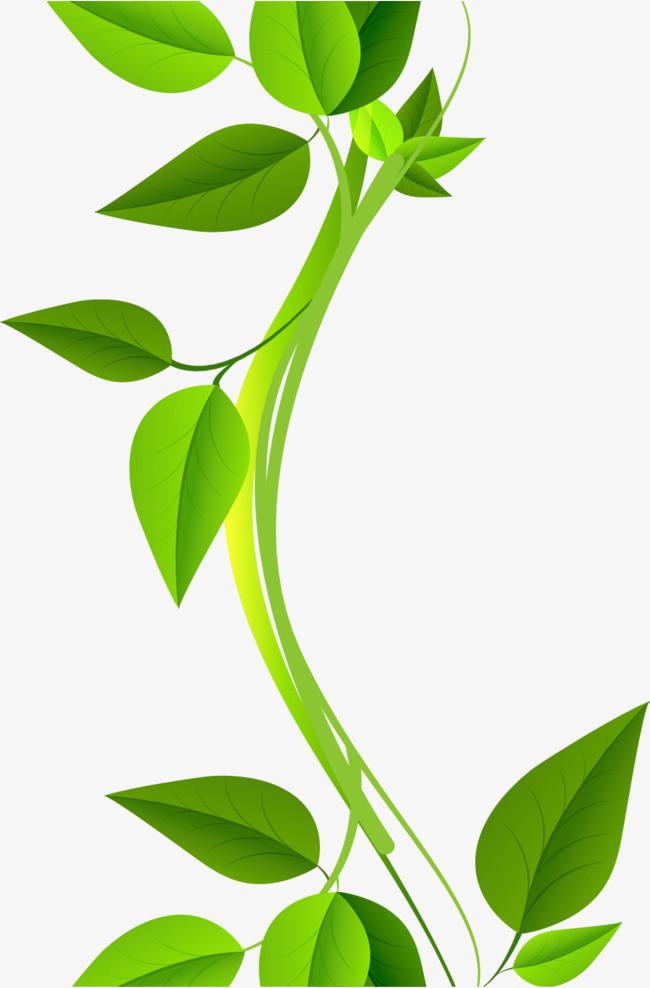 背景 壁纸 绿色 绿叶 树叶 植物 桌面 650_988 竖版 竖屏 手机