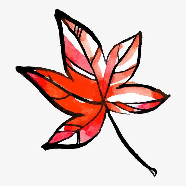 手绘水彩的枫树叶
