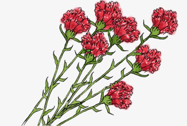 手绘水彩装饰插图母亲节康乃馨花束插画