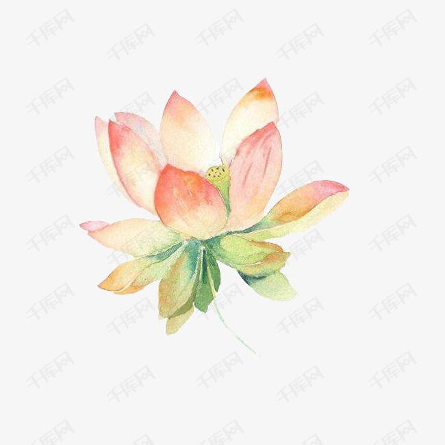 柔软水彩荷花图案素材图片免费下载 高清装饰图案png 千库网 图片编号5047763