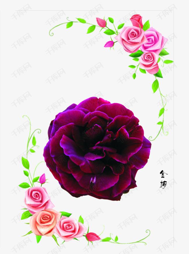 紫红色的花朵