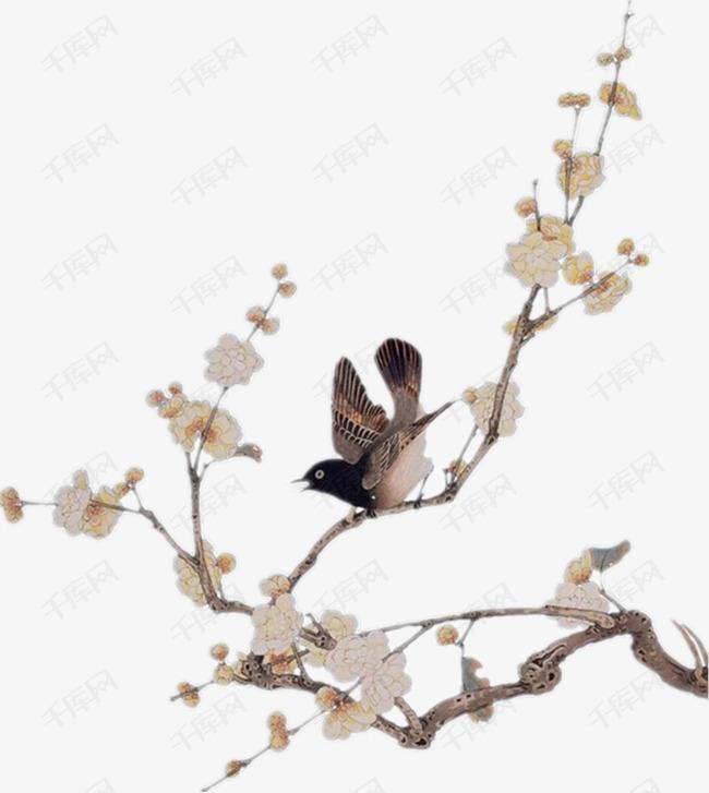花枝上的小鸟