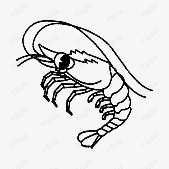 虾的简笔画图片教程:小虾有自己的须