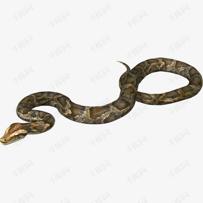 爬行的蛇素材图片免费下载 高清png 千库网 图片编号5327918