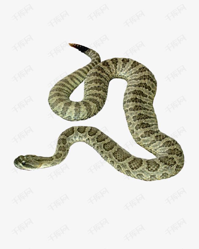 绿色爬行的蛇素材图片免费下载 高清产品实物png 千库网 图片编号7593099