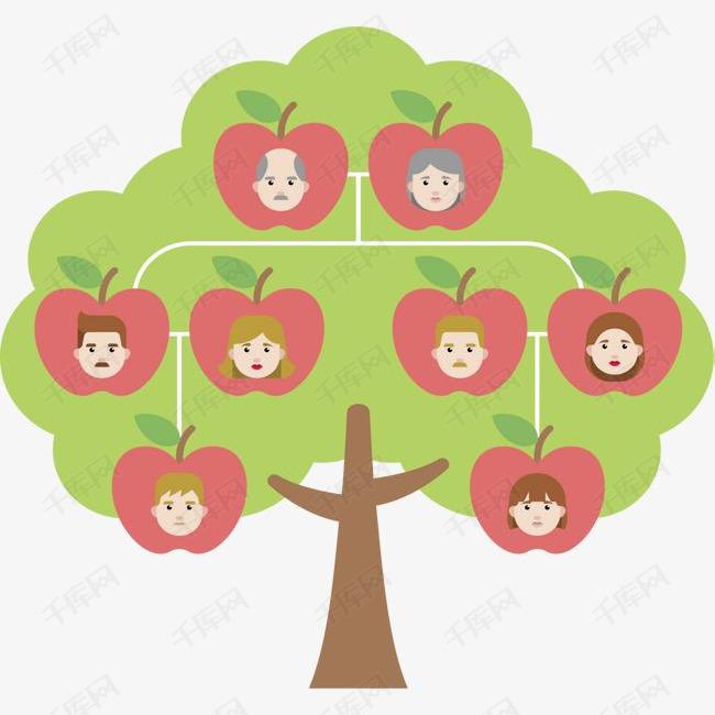 三年级英语画家庭树_三年级英语下册家庭树怎么画