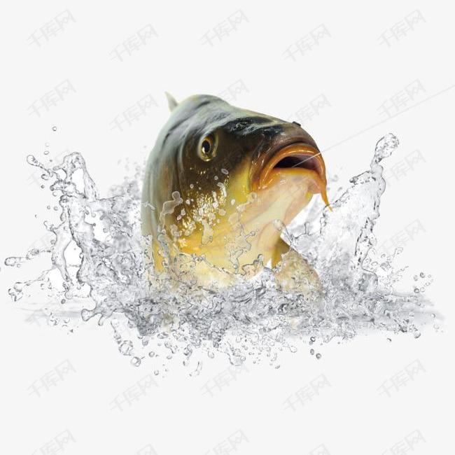 水里的鱼素材图片免费下载 高清装饰图案png 千库网 图片编号5535923