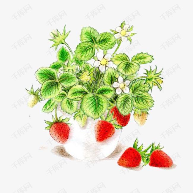 矢量手绘草莓