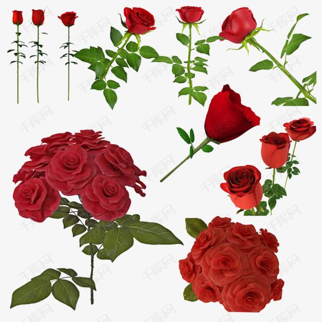 带刺的玫瑰