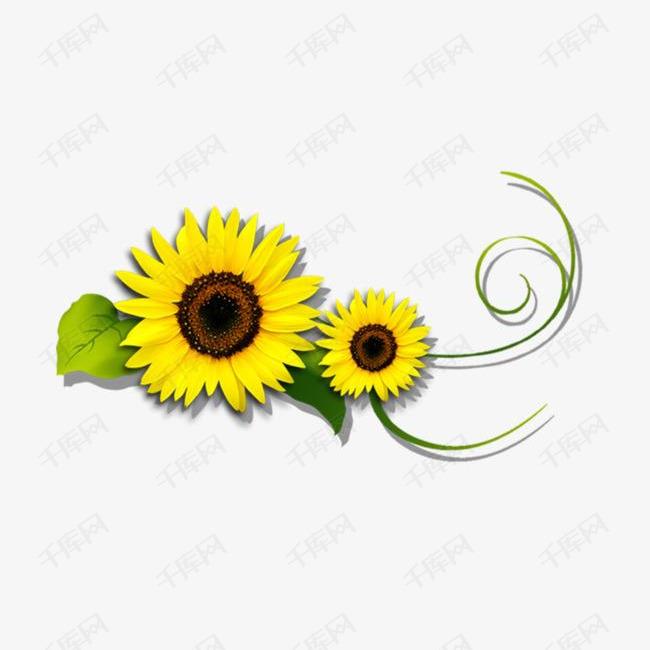 清新黄色向日葵