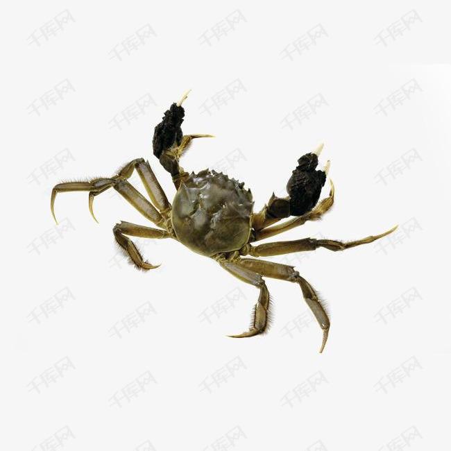 生猛大闸蟹