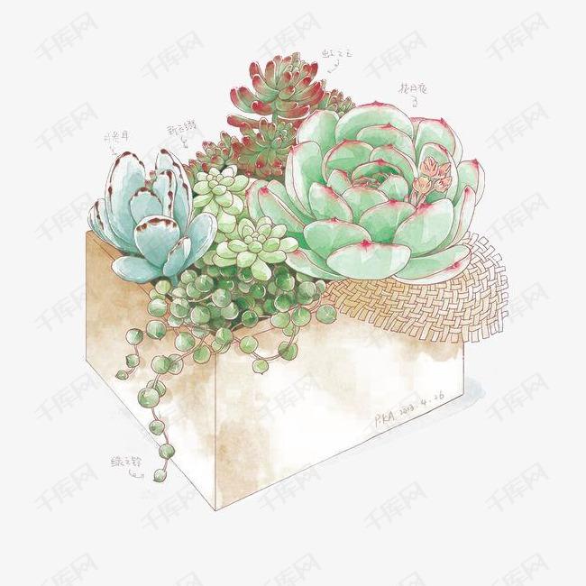 多肉卡通素材图片免费下载_高清植物手绘png吧原创漫画图片