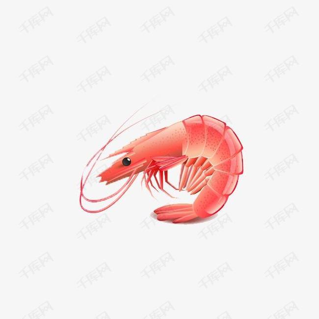 手绘红色小龙虾素材图片免费下载 高清卡通手绘png 千库网 图片编号4498658