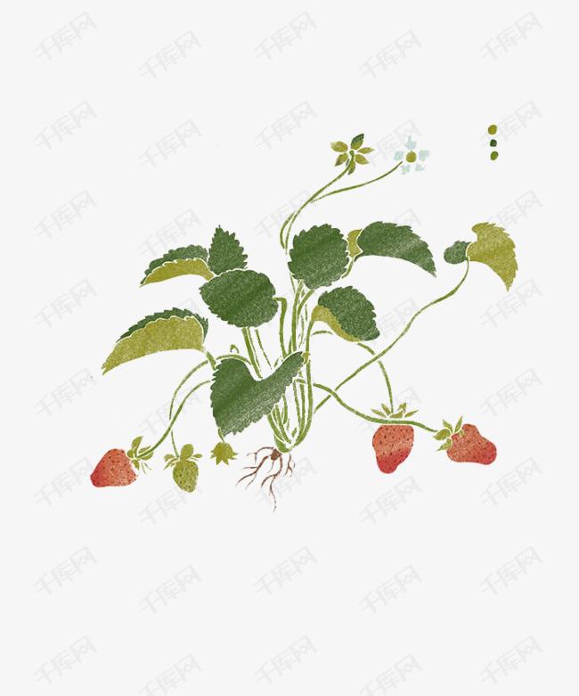 手绘中国风草莓素材图片免费下载 高清png 千库网 图片编号8702594