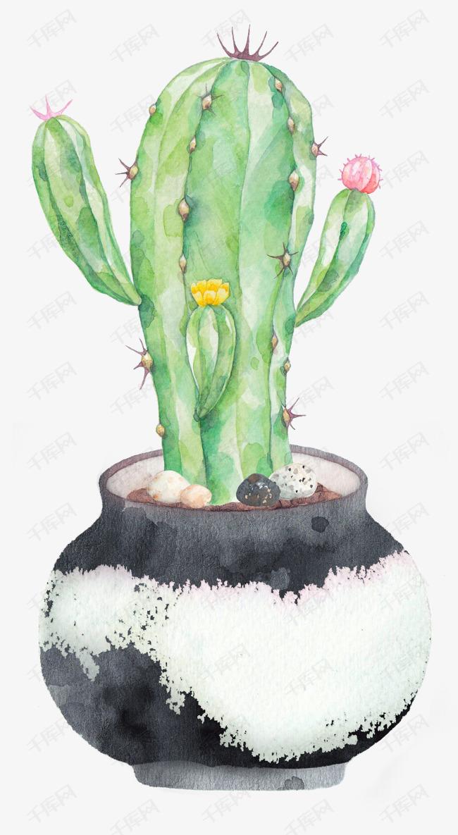 花盆里的仙人掌水彩图