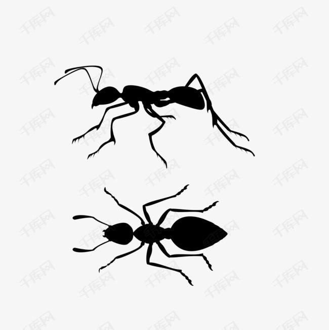手绘蚂蚁的素材免抠蚂蚁手绘矢量图装饰矢量装饰装饰画