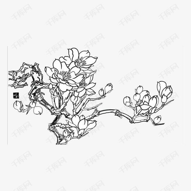 中国风手绘玉兰花的素材免抠中国风手绘玉兰花美丽玉兰花绽放美丽玉兰花矢量图