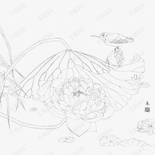 国画睡莲线稿图片