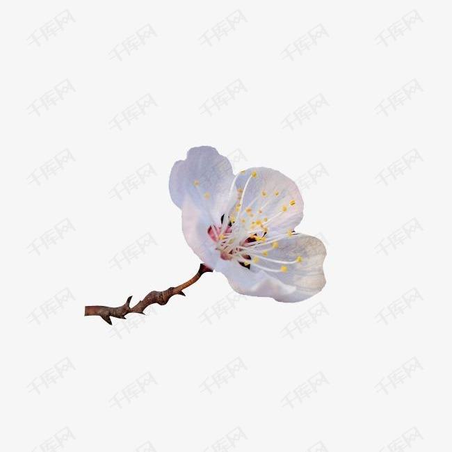 杏花花瓣花枝中国风漂浮古风素材图片免费下载 高清漂浮素材png 千库网 图片编号1828294