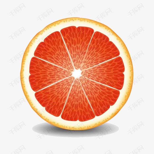 矢量手绘橙子柚子