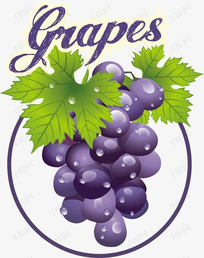 卡通精美手绘葡萄