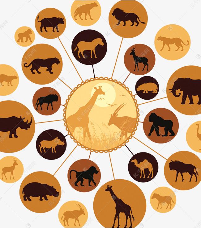 野生动物食物链