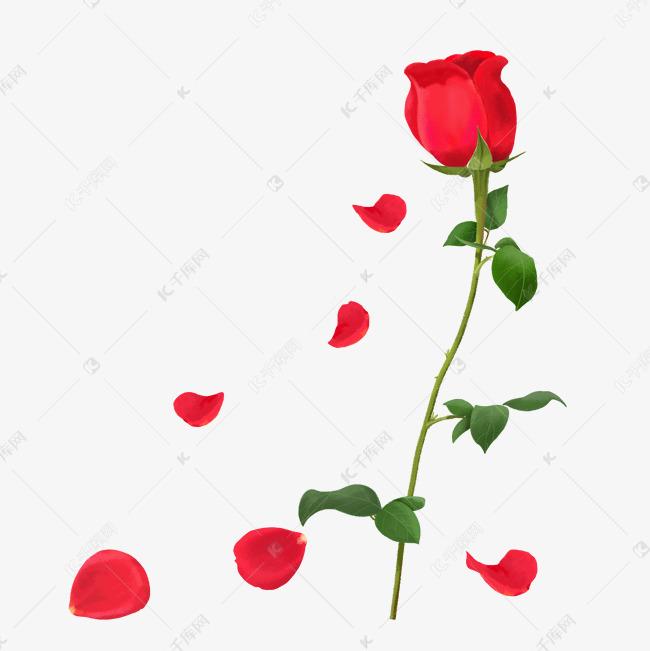 手绘半写实向红色玫瑰花的素材免抠手绘玫瑰花玫瑰花叶子写实灯笼半写实向手绘手绘玫瑰花手绘花瓣手绘鲜花玫瑰花瓣红色玫瑰飘零花瓣月季花手绘浪漫玫瑰花卉花朵