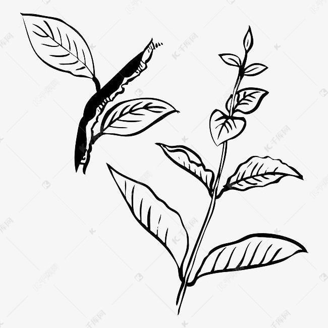 手绘简约黑色线条叶子的素材免抠树干简约手绘黑色线条手绘树叶叶子简笔画树叶植物图片