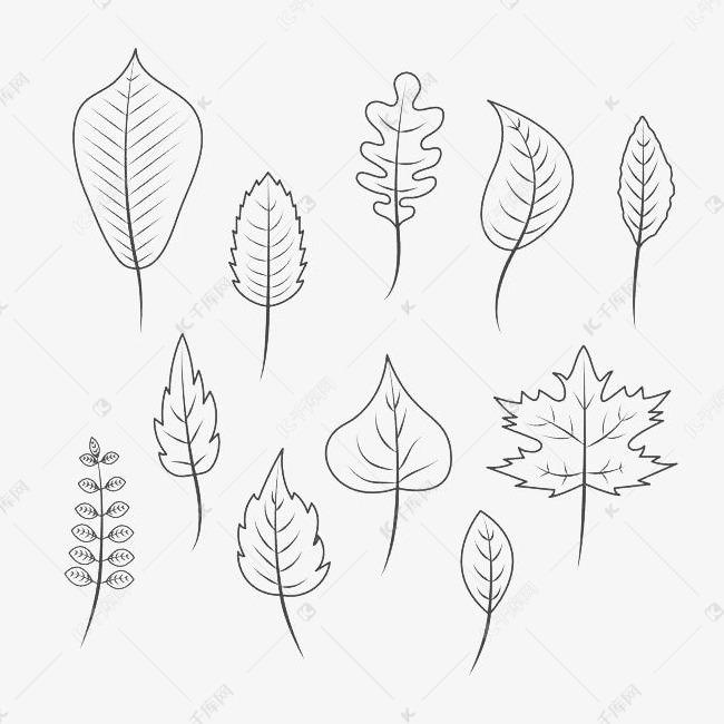 黑色简约手绘树叶素材图片免费下载 高清png 千库网 图片编号9436145图片