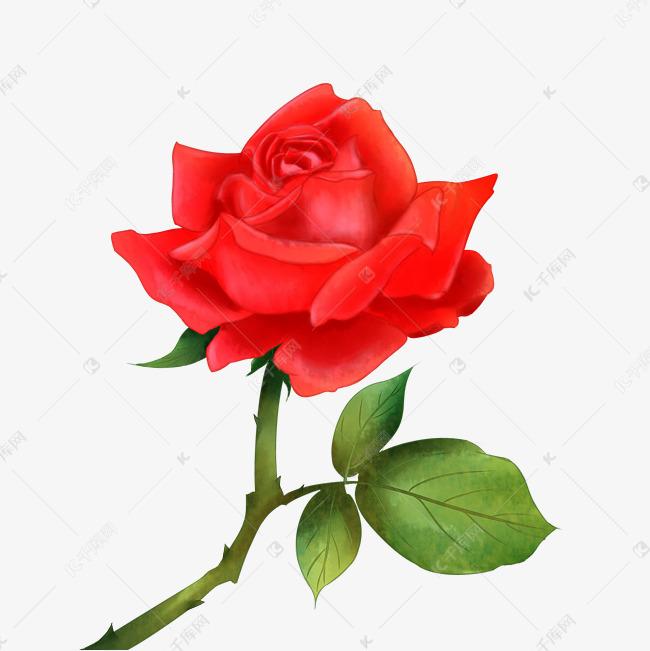 情人节手绘玫瑰花卉的素材免抠情人节520手绘室内家具飘落玫瑰花瓣情人节玫瑰手绘玫瑰手绘花卉红色玫瑰情人节玫瑰花手绘玫瑰花卉花朵