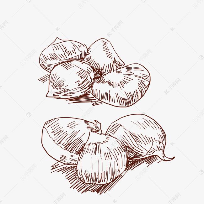 线描板栗水果插画素材图片免费下载 千库网