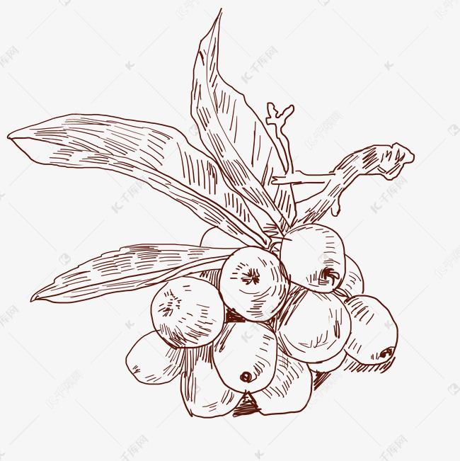 线描葡萄水果插画素材图片免费下载 千库网