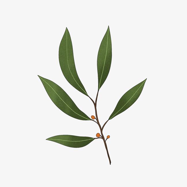 桉树树根图片素材图片免费下载 高清装饰图案png 千库网 图片编号7214675