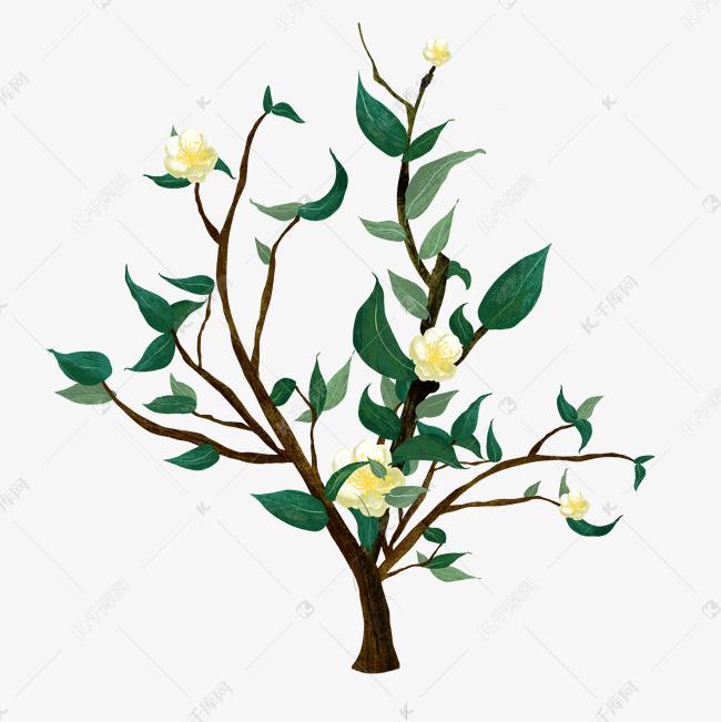 一颗开花的茶树素材图片免费下载 千库网