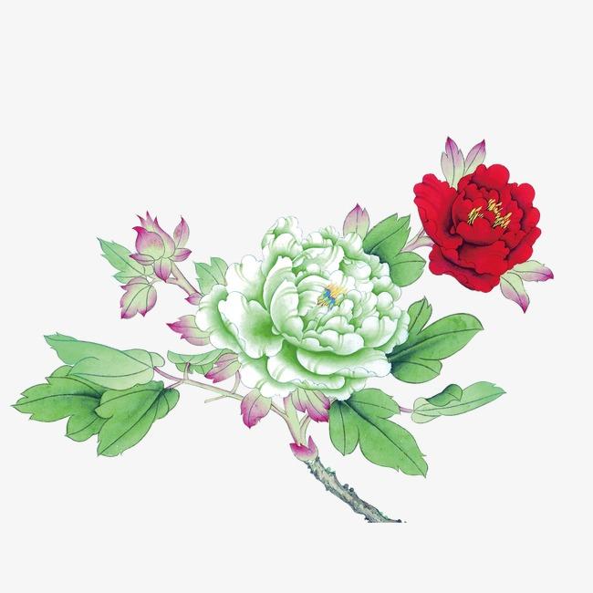 中国画牡丹花_牡丹花 中国风 花朵