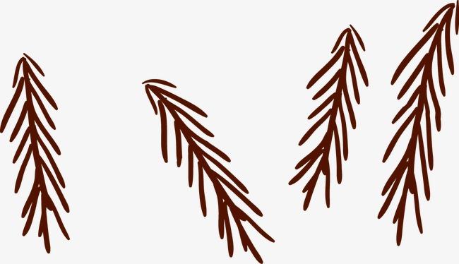 圣诞 装饰 松树枝