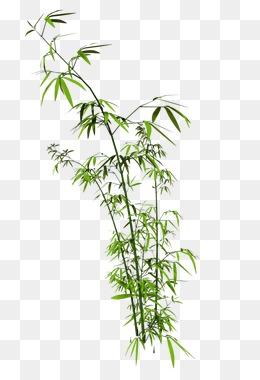 风景园林竹子的手绘分享展示