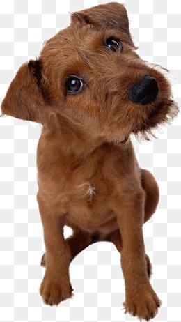可爱宠物小狗