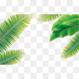 【椰子树叶素材】免费下载 椰子树叶图片大全 千库网png