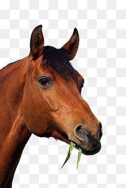 马吃草图片背景素材免费下载,图片编号44440