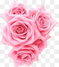 五朵粉色玫瑰花