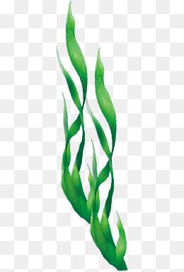 u3010 u6d77 u8349 u7d20 u6750 u3011  u6d77 u8349 u56fe u7247 u5927 u5168  u6d77 u8349 u7d20 u6750 u514d u8d39 u4e0b u8f7d  u5343 u5e93 u7f51png seaweed border vector seaweed texture vector