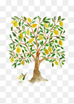 手绘植物图谱 柠檬