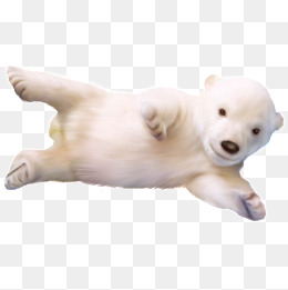北极熊宝宝眼镜被蚊子咬了图片
